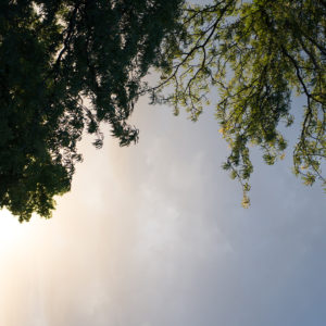 Photography, picture of trees with blue sky