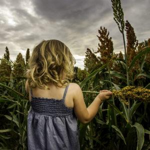 Photography, little girl in blue dress in a cornfield