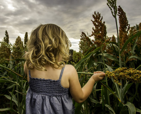 Photography, little girl in blue dress in a cornfield