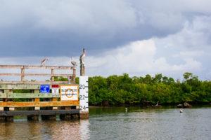bird perched on a pier in florida river, moss image, chris moss, florida, cuba, travel