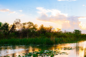 swamp and trees, travel, cuba, florida, anna maria